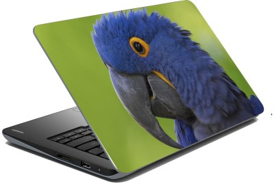 meSleep Parrot 70-491 Vinyl Laptop Decal 15.6