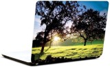 Pics And You Under The Trees 3M/Avery Vi...