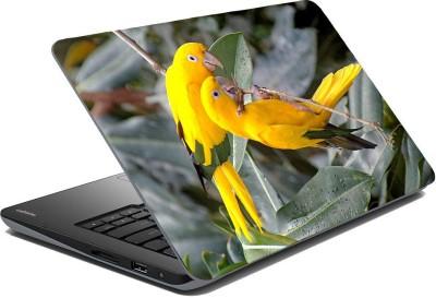 Posterhunt SVPNCA20102 Parrot Laptop Skin Vinyl Laptop Decal