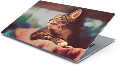 Lovely Collection wise cat Vinyl Laptop Decal 15.6