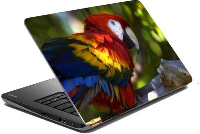 meSleep Parrot 70-400 Vinyl Laptop Decal 15.6