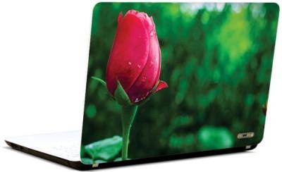 PicsAndYou Blossom In Vogue Vinyl Laptop Decal