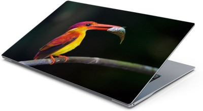 Lovely Collection Colorfull Bird Vinyl Laptop Decal 15.6