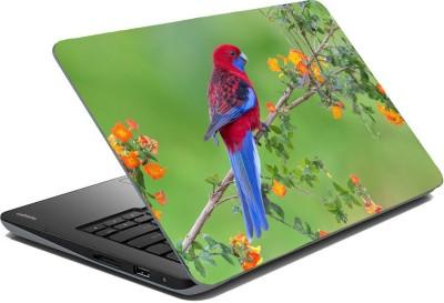 Posterhunt SVPSI91 Parrot Laptop Skin Vinyl Laptop Decal 14.1