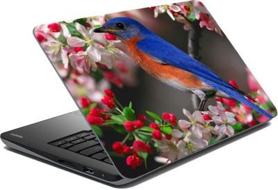 Posterhunt SVshi4868 Parrot Laptop Skin Vinyl Laptop Decal 14.1