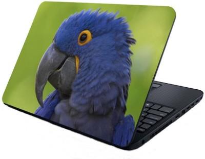 Dstore Blue Parrot Vinyl Laptop Decal
