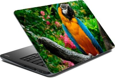 Posterhunt SVPNCA20117 Parrot Laptop Skin Vinyl Laptop Decal