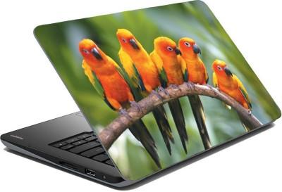 Posterhunt SVshi4841 Parrot Laptop Skin Vinyl Laptop Decal 14.1