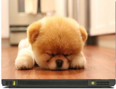 Livestash Cute Sleeping Dog Vinyl Laptop Decal