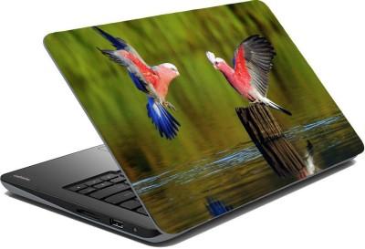 Posterhunt SVPNCA20097 Parrot Laptop Skin Vinyl Laptop Decal 14.1