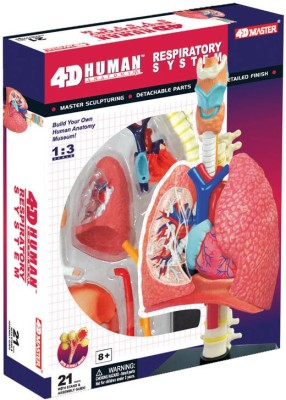 Tedco 4D Human Anatomy Respiratory System Model by Tedco Toys