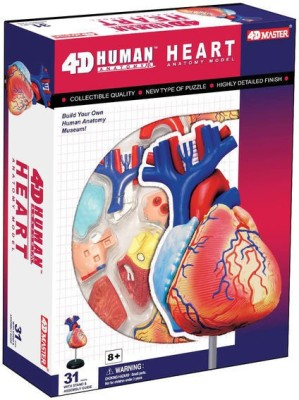 Tedco 4D Anatomy Heart Model by Tedco Toys