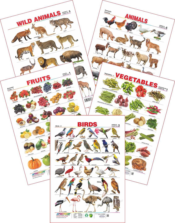 Spectrum Spectrum Set of 5 Educational Wall Charts (Wild Animals, Domestic Animals, Birds 2, Assorted Fruits 1 & Vegetables 1)(Multicolor) Flipkart
