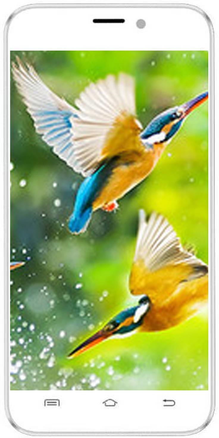 Intex Aqua Q8 (1GB RAM, 8GB)