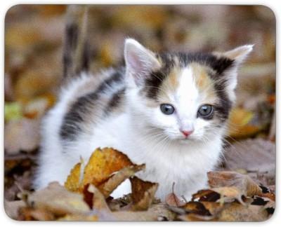 Digiclan Digiclan Multicolor cute cat Mouse Pad-SZMP083 Mousepad