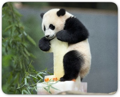 Digiclan Digiclan Panda Mouse Pad-SZMP089 Mousepad