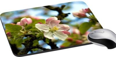 meSleep-Nature-PD-35-033-Mousepad