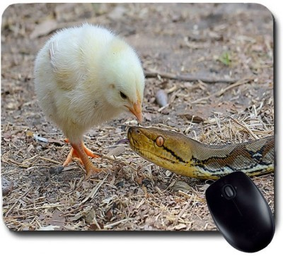 Awwsme Chicken Playing With Snake Mousepad