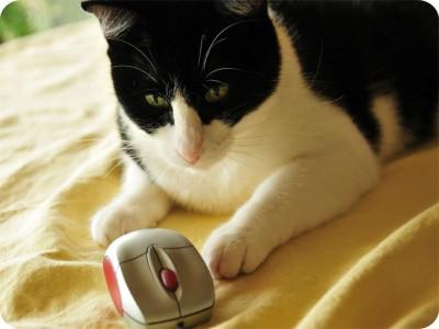 SYL Cat mouse Mousepad