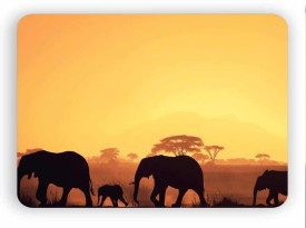 Magic Cases Latest design elephants 8a Mousepad(Multicolor)