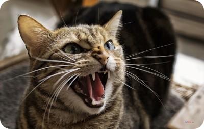 RUKMINI ANGRY CAT Mousepad