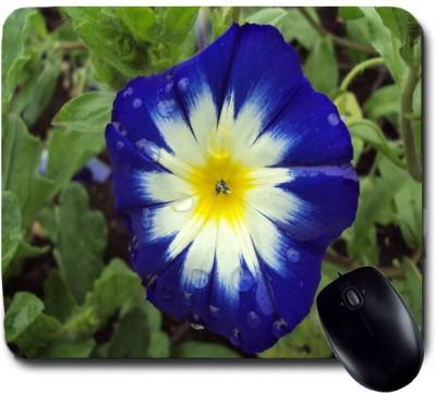 Awwsme Blue Flower With Due Mousepad