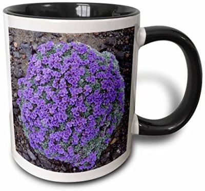 3dRose Alaska, Arctic forget-Me-Not Flowers Us02 Ksc0027 Kevin Schafer Two Tone Black , 11 oz, Black/White Ceramic Mug