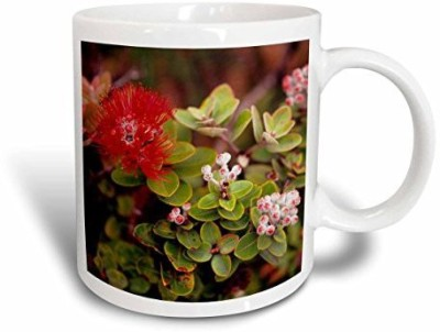 3dRose Lehua Blossoms in Hawaii Volcanoes Np, Big Island, Hawaii. Ceramic , 15 oz, White Ceramic Mug