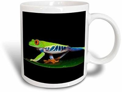 3dRose Costa Rica, Red-Eyed Tree Frog SA22 KSC0173 Kevin Schafer Ceramic , 11-Ounce Ceramic Mug