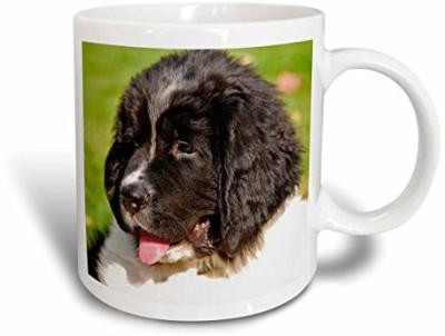 3dRose mug_93608_2 Oregon, Portland, Landseer Newfoundland Dog Puppy-US38 BJA0526-Jaynes Gallery Ceramic , 15-Ounce Ceramic Mug