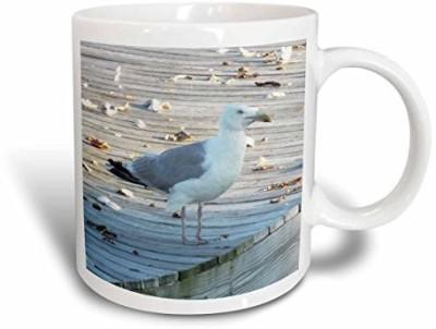 3dRose mug_165209_1 Seagull Standing on The Dock of The Bay Ceramic , 11-Ounce Ceramic Mug
