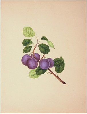 Thedecorativearts Handmade Grapes Watercolor Painting