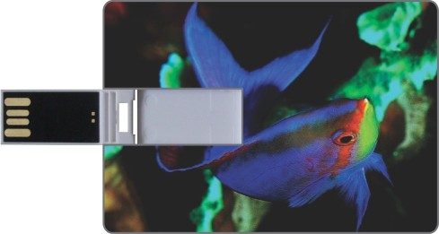 View Printland Credit Card Shaped PC82861 8 GB Pen Drive(Multicolor)  Price Online