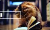 Printland Credit Card Book Reading 8 GB ...