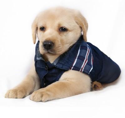 Petslike Dress for Dog