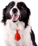 Futaba Pet Grooming Necktie - Red Plain ...