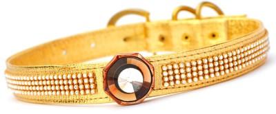 XPO Precious Golden Luxury Dog Show Collar