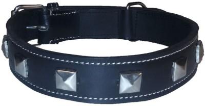 Petsplanet Dog Everyday Collar