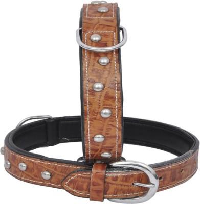 Wonder Wish Dog Everyday Collar