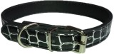Pets Planet Dog Everyday Collar (Small, ...
