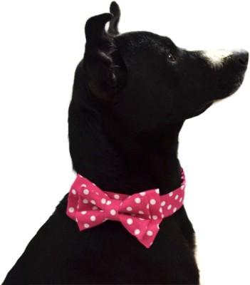 That Dog In Tuxedo Pinky Polka - S Dog Show Collar