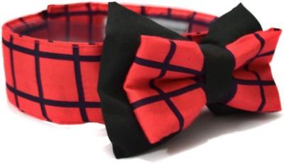 That Dog In Tuxedo Amazing Spiderman -S Dog Show Collar