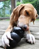 Kong Extreme Rubber Toy For Dog