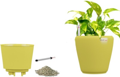 Yuccabe Italia Stoic Yellow Self Watering Planter Plant Container Set