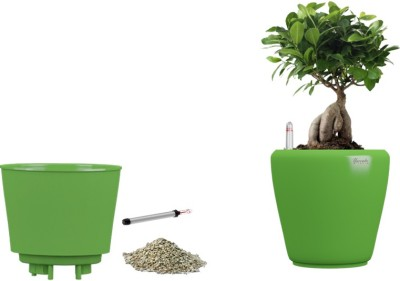 Yuccabe Italia Stoic Green Self Watering Planter Plant Container Set