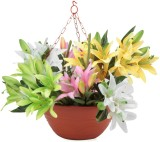Blessed New Basket Plant Container Set (...