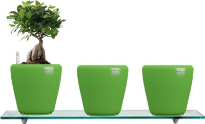 Yuccabe Italia Combo for 3 Stoic Green Self Watering planter Plant Container Set