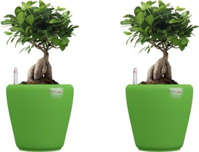 Yuccabe Italia Plant Container Set
