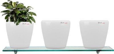 Yuccabe Italia Combo for 3 Stoic White Self Watering planter Plant Container Set