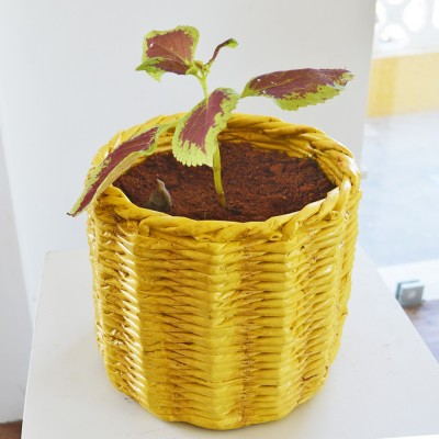 Greymode Pinnal Plant Container